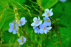 Valley of Flowers: Eden Beyond the Rainbow