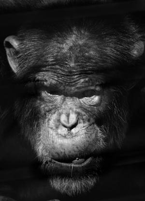 Chimp Eden - A better planet for the apes.