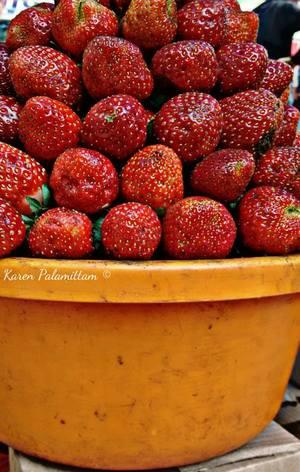 Road Trip to Mahabaleshwar the land of Strawberries