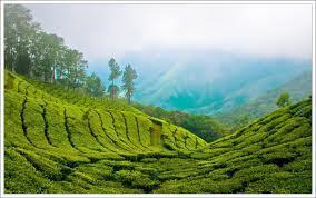 Wandering around Kerala.....
