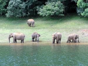 Thekkady: Jeep Safari and a plethora of activities