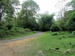 Parambikulam Tiger Reserve, Kerala: wilderness and more