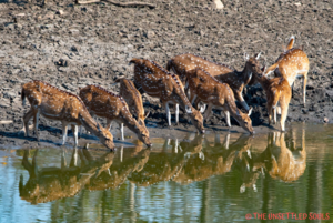 Pench National Park : Stepping into Mowgli's Jungle