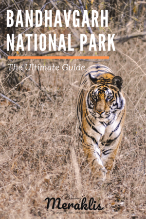 The Ultimate Guide to Bandhavgarh National Park - Why India's Densest Tiger Reserve should be on you