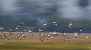 Bharatpur a heaven on earth for bird watchers