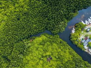 The New Bullet Train in Mumbai Will Affect 54,000 Mangroves. So Much for Combating Climate Change!