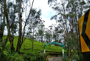 Government Tea Garden Ooty 1/undefined by Tripoto