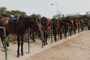 Experience Horseback Riding at one of the Oldest & Largest Private Civilians Riding Clubs, in Mumbai