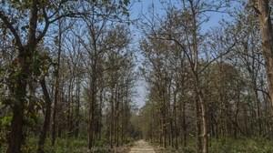 Planning a trip to Jim Corbett | Uttarakhand - Sassily Solo