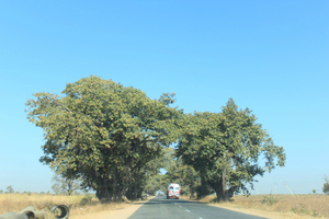Marathwada Road Trip - I - Nanded Gurudwara - In the name of Waheguru !