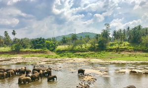 "Sri Lanka: Land of Pristine Beaches and Mountains- One stop guide to explore the ""Wonder of Asia"""