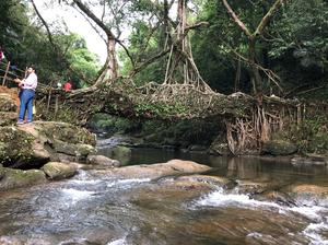 The Magnificent Living Roots Bridge Of Shillong