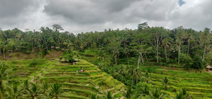 Bali: A journey you wish didn't have an end