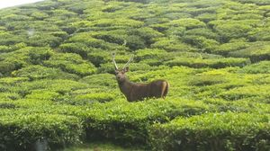 Coonoor, that little slice of Paradise