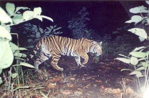Pilibhit Tiger Reserve 1/1 by Tripoto