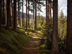 Harz National Park 1/undefined by Tripoto