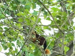 Wayanad Wildlife Division 1/7 by Tripoto