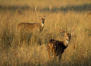 Dachigam National Park 1/undefined by Tripoto