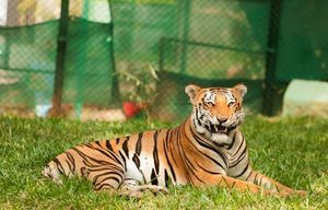 A Day Outing To bannerghatta national park