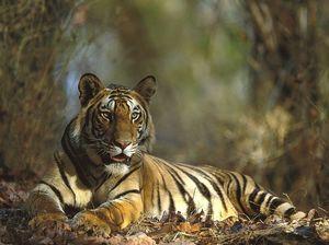 Bandhavgarh National Park 1/9 by Tripoto