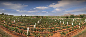 Grover Vineyards Ltd 1/undefined by Tripoto