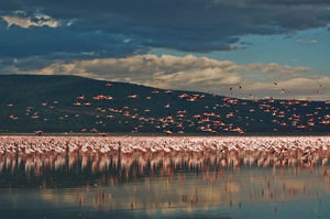 Nakuru 1/undefined by Tripoto