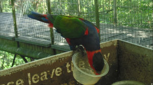 Singapore-Thailand Trip: Jurong Bird Park And Wonder Full