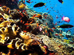 Cheapest Places in the World to Become a Certified Scuba Diver