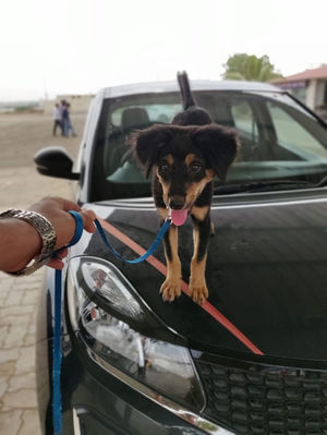 Road Trip, Dog Owner And Struggle For Pet Friendly Hotel