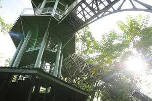 Rainforest Discovery Centre (RDC) Sepilok Sandakan Sabah Malaysia 1/undefined by Tripoto
