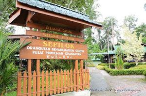 Sepilok Orangutan Rehabilitation Centre Sandakan Sabah Malaysia 1/undefined by Tripoto