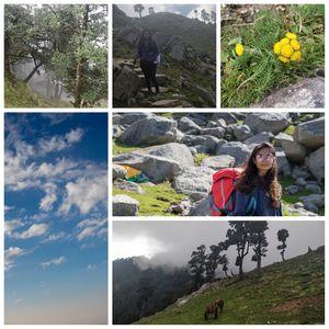 Delhi - Indrahar Pass trek - Paragliding at Bir Billing DAY 5