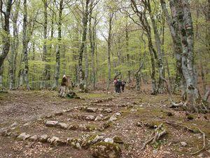 Fagosa Forest 1/1 by Tripoto
