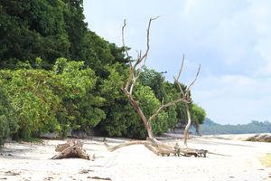 Amazing Andamans