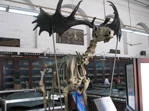 Dinosaurs in India - in Museums and Fossils