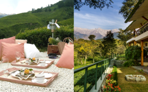 Stunning Himalayan Tea Estates Where You Can Spend An Entire Weekend.