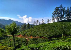 Tea Gardens of Munnar | Kerala | Explore as you Run