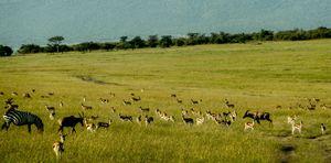 Varsha travels to Kenya