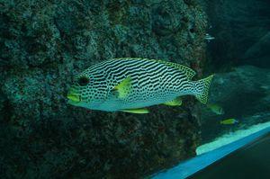 Marine life of Singapore