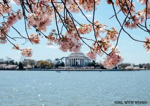 Must visit attractions in Washington DC.