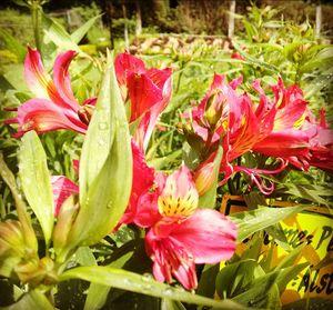 A day in Botanical garden of kodaikanal