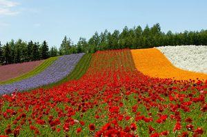 Hokkaido 1/undefined by Tripoto