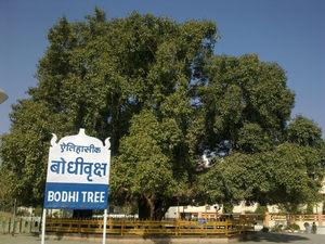 Bodh Gaya - Doorway to Heaven