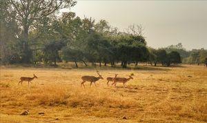 Tadoba National park #adventureactivity