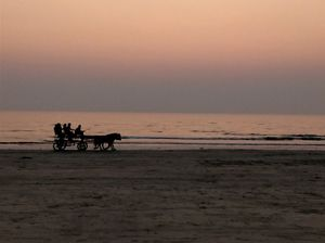 Tarkali beach : Horse riding