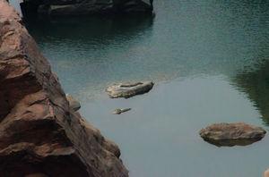 ken gharial wildlife sanctuary