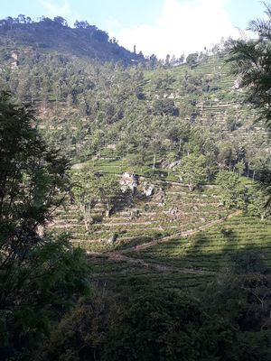 QUEEN OF THE HILLS AND KING OF THE JUNGLE:  A TRIP TO KOTAGIRI, COONOOR AND MASINAGUDI.