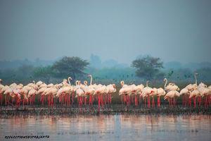 In Search of Flamingos: My Solo Trip to Bhigwan on TVS Jupiter#adventureactivity