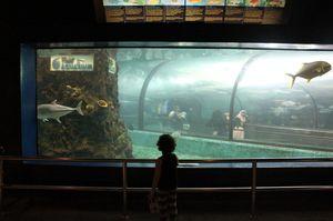 Phuket Aquarium Wichit Phuket Thailand 1/undefined by Tripoto