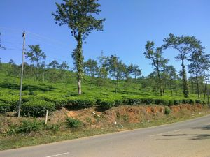 Towards west, To Wayanad